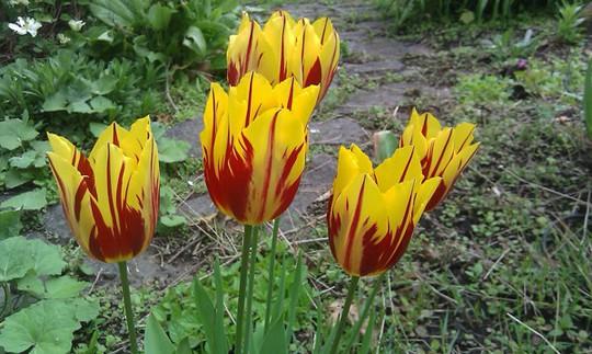 Choáng với giá tiền của 6 loài hoa đắt nhất thế giới - Ảnh 9.