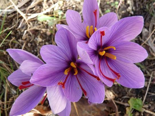 Choáng với giá tiền của 6 loài hoa đắt nhất thế giới - Ảnh 10.