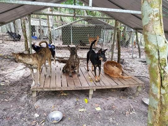 """Giải cứu chó Xoáy Phú Quốc từ quán """"cầy tơ"""" - Ảnh 3."""