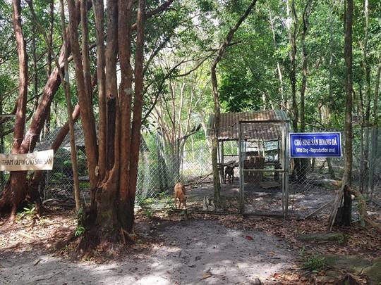 """Giải cứu chó Xoáy Phú Quốc từ quán """"cầy tơ"""" - Ảnh 4."""