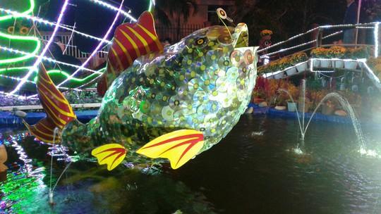 """Ngắm đường hoa Xuân """"hải sản"""" đặc sắc ở Côn Đảo - Ảnh 32."""