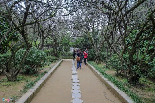 Nhà vườn 5.000 m2 cổ nhất xứ Huế - Ảnh 2.