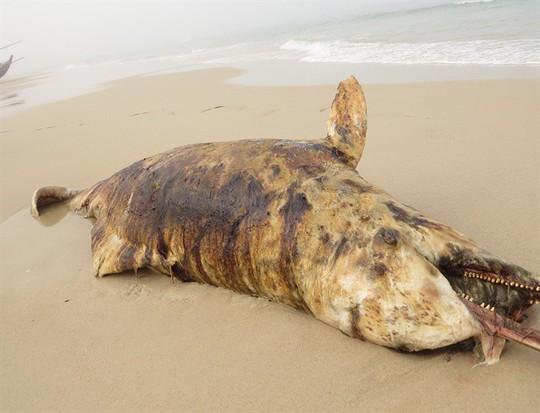 Phát hiện 3 xác cá thiêng chết và dạt cùng lúc vào biển Quảng Bình - Ảnh 1.