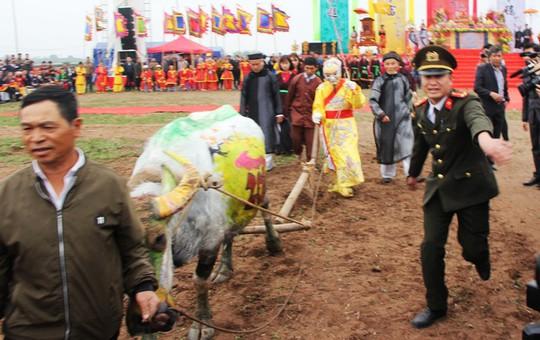 3 trâu đoạt giải trang trí vinh dự cày ruộng trong lễ hội Tịch Điền - Ảnh 3.