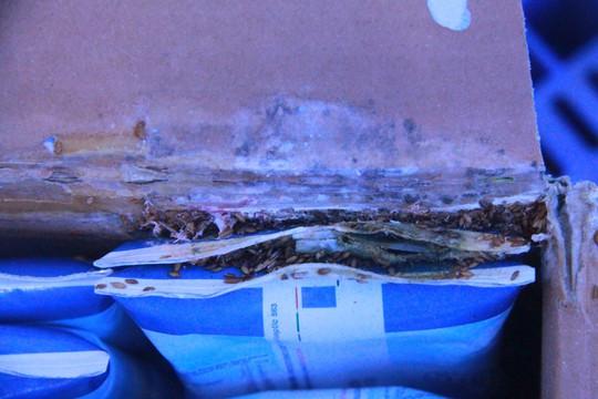 Tá hỏa phát hiện dòi trong thùng sữa TH True Milk - Ảnh 1.