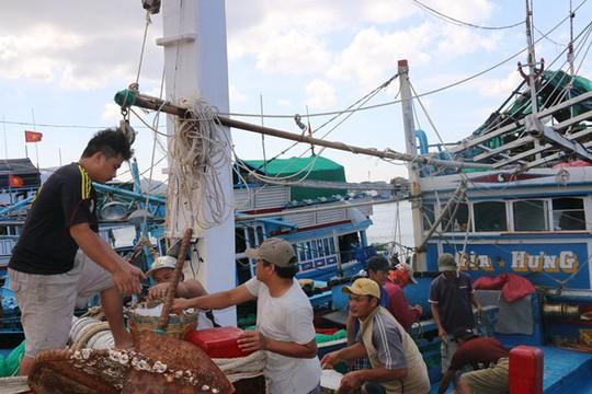 Ngư dân Ninh Thuận trúng đậm cá cơm sau Tết - Ảnh 2.