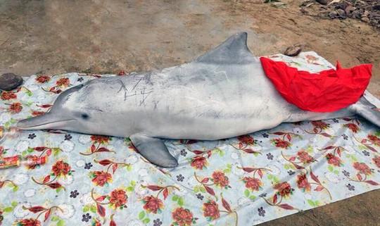 Đầu năm, cá voi và cá heo chết cùng trôi dạt vào biển Cửa Hiền - Ảnh 1.