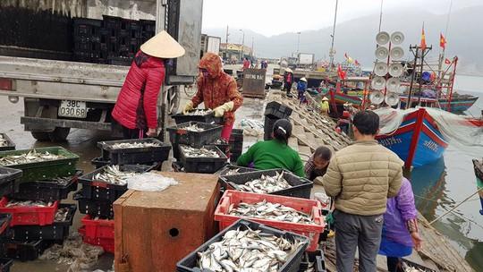 Ngư dân phấn kích trúng đậm lộc biển 4-5 tấn cá mỗi tàu - Ảnh 3.