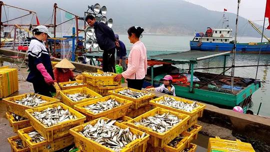 Ngư dân phấn kích trúng đậm lộc biển 4-5 tấn cá mỗi tàu - Ảnh 5.