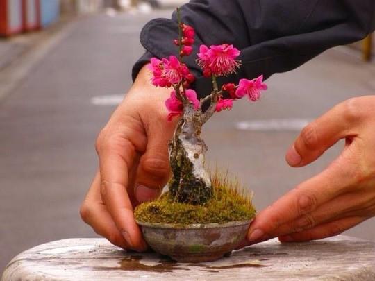 15 chậu bonsai mini siêu đẹp trang trí nhà dịp Tết  - Ảnh 2.