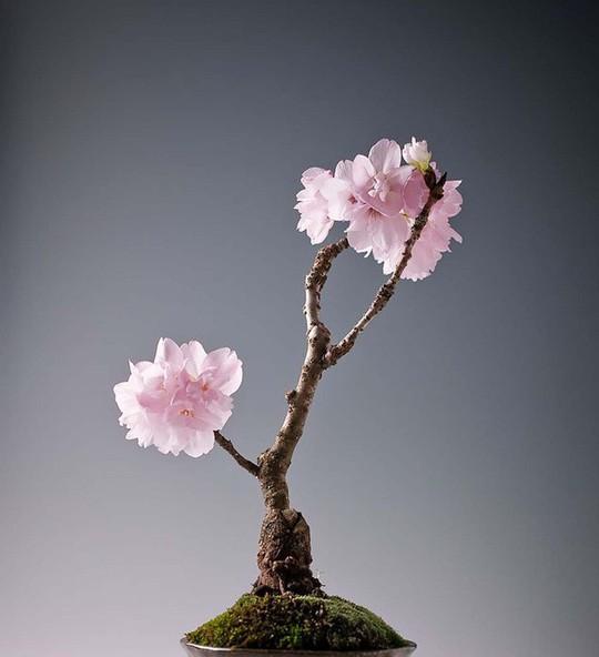 15 chậu bonsai mini siêu đẹp trang trí nhà dịp Tết  - Ảnh 11.