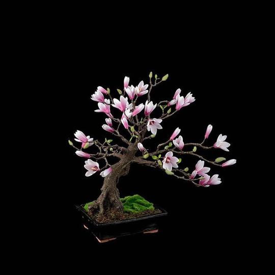 15 chậu bonsai mini siêu đẹp trang trí nhà dịp Tết  - Ảnh 12.