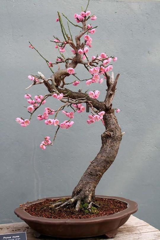 15 chậu bonsai mini siêu đẹp trang trí nhà dịp Tết  - Ảnh 13.