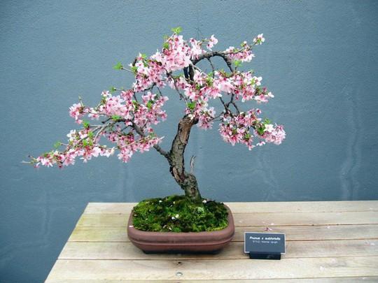 15 chậu bonsai mini siêu đẹp trang trí nhà dịp Tết  - Ảnh 15.