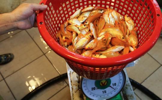 Nhộn nhịp mua cá chép lúc nửa đêm ở chợ lớn nhất Sài Gòn - Ảnh 3.