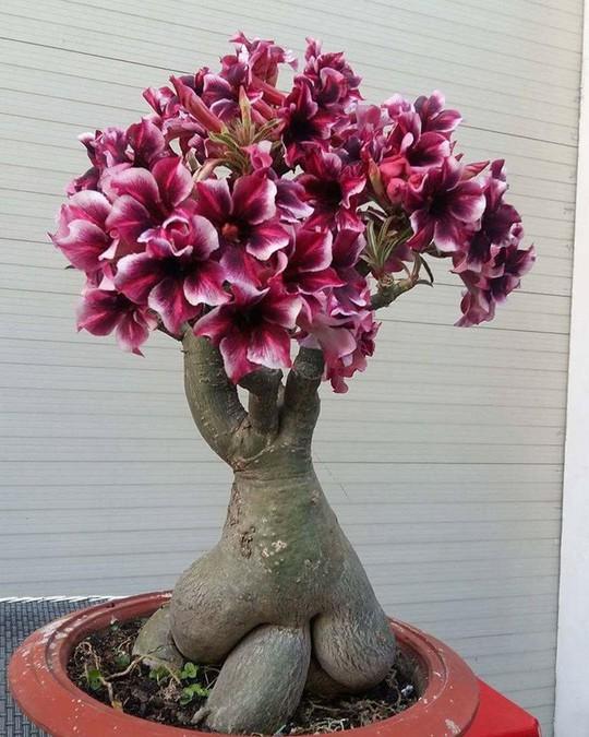 15 chậu bonsai mini siêu đẹp trang trí nhà dịp Tết  - Ảnh 3.