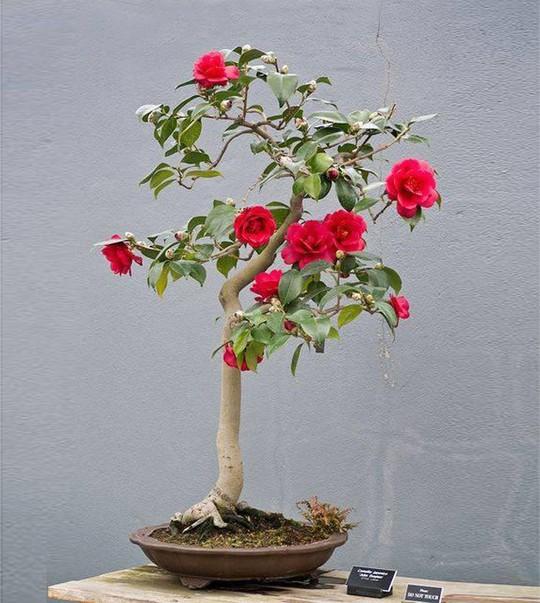 15 chậu bonsai mini siêu đẹp trang trí nhà dịp Tết  - Ảnh 5.