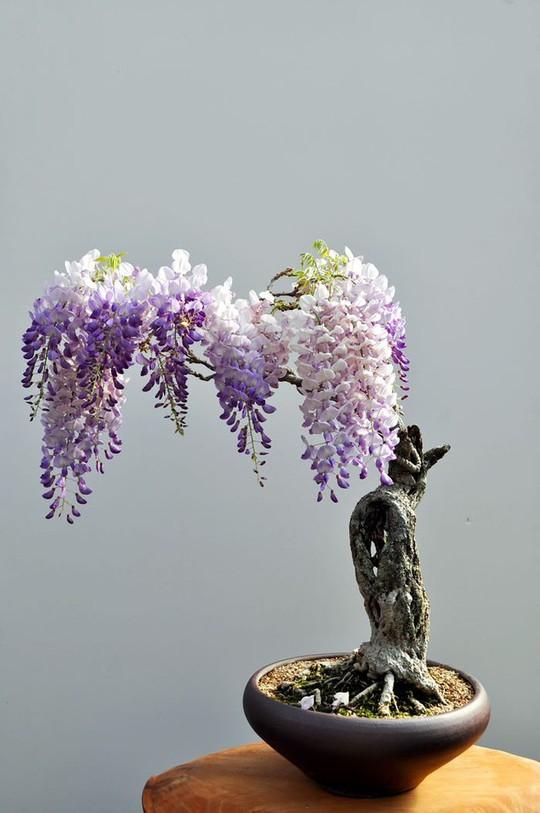 15 chậu bonsai mini siêu đẹp trang trí nhà dịp Tết  - Ảnh 6.