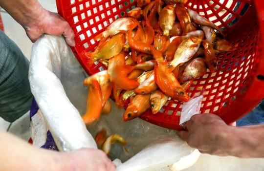 Nhộn nhịp mua cá chép lúc nửa đêm ở chợ lớn nhất Sài Gòn - Ảnh 7.