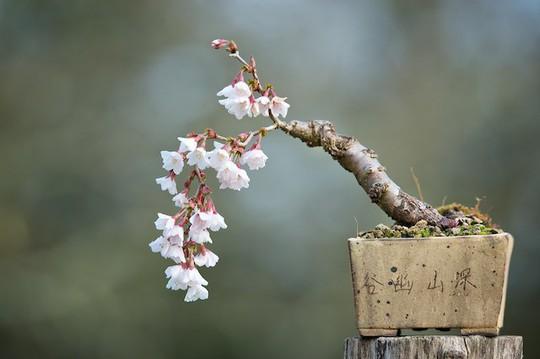15 chậu bonsai mini siêu đẹp trang trí nhà dịp Tết  - Ảnh 7.