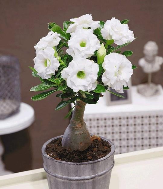 15 chậu bonsai mini siêu đẹp trang trí nhà dịp Tết  - Ảnh 9.
