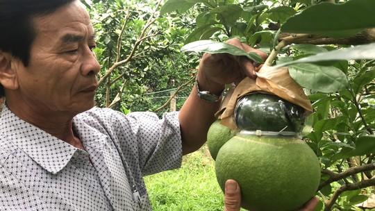 Nâng niu đặc sản Tết: Nâng cấp trái cây miệt vườn - Ảnh 1.