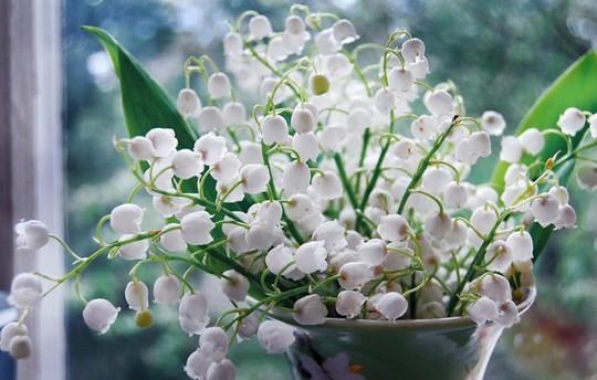Những loại hoa chơi Tết siêu đẹp, siêu độc tính cần cảnh giác - Ảnh 7.