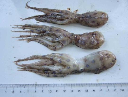Tránh xa những loại hải sản có lượng độc tố cao gây chết người - Ảnh 4.
