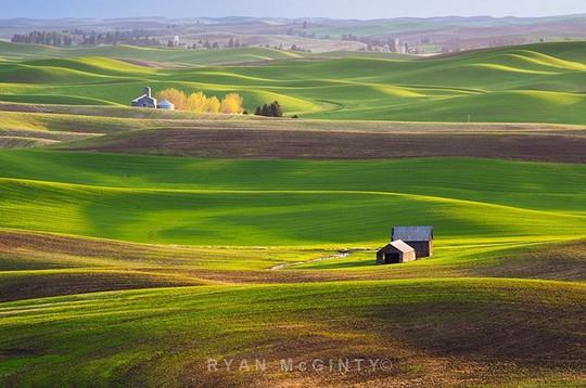 Vùng đất có những thảm cỏ đa sắc màu tuyệt đẹp - Ảnh 1.