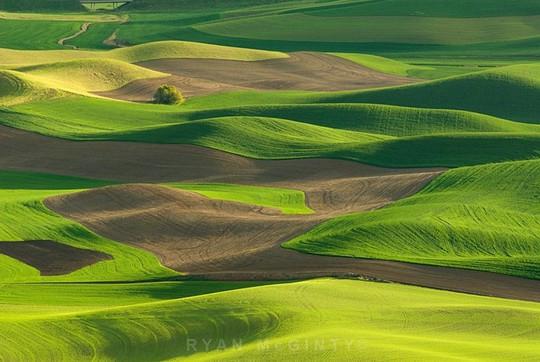 Vùng đất có những thảm cỏ đa sắc màu tuyệt đẹp - Ảnh 2.