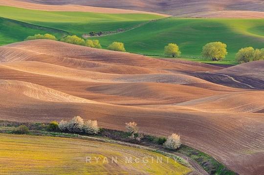 Vùng đất có những thảm cỏ đa sắc màu tuyệt đẹp - Ảnh 8.