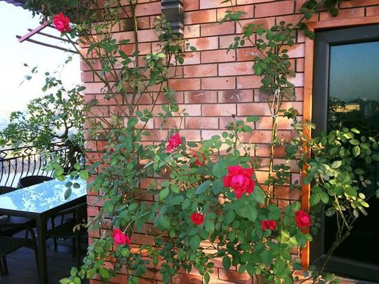 Ngắm ban công nhỏ xinh đầy hoa hồng của bà mẹ Hà Nội - Ảnh 7.