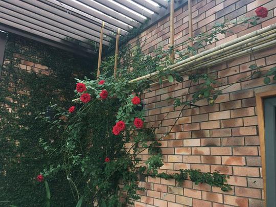 Ngắm ban công nhỏ xinh đầy hoa hồng của bà mẹ Hà Nội - Ảnh 8.