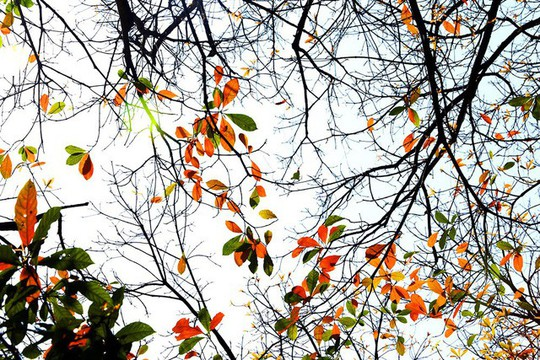 Hồ Gươm lãng mạn mùa lộc vừng thay màu lá - Ảnh 1.