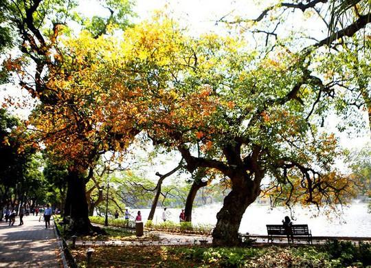 Hồ Gươm lãng mạn mùa lộc vừng thay màu lá - Ảnh 4.