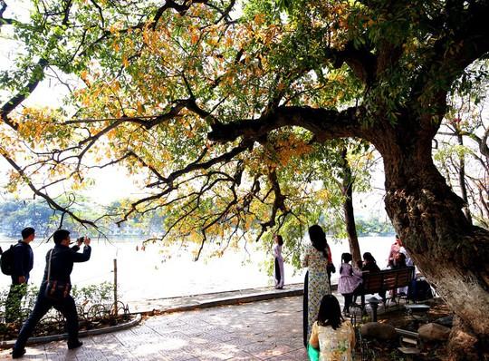 Hồ Gươm lãng mạn mùa lộc vừng thay màu lá - Ảnh 7.