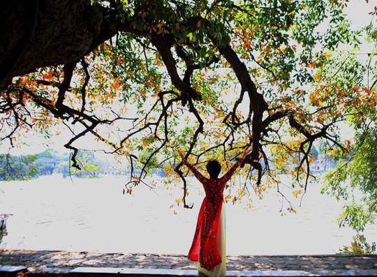 Hồ Gươm lãng mạn mùa lộc vừng thay màu lá - Ảnh 8.