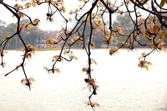 Hồ Gươm lãng mạn mùa lộc vừng thay màu lá - Ảnh 9.