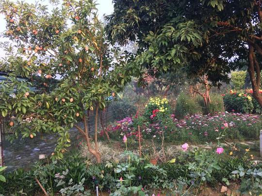 Biệt thự nhà vườn đẹp như mơ của diva Mỹ Linh - Ảnh 10.
