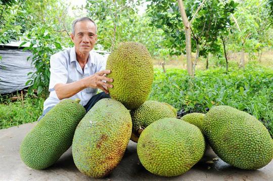 Mít Thái tiếp tục tăng giá kỷ lục - Ảnh 1.