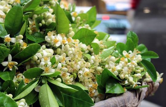 Truy tìm nguồn gốc hoa bưởi bán đầy phố Hà thành - Ảnh 1.