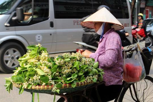 Truy tìm nguồn gốc hoa bưởi bán đầy phố Hà thành - Ảnh 2.