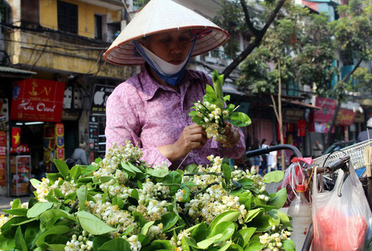 Truy tìm nguồn gốc hoa bưởi bán đầy phố Hà thành - Ảnh 3.