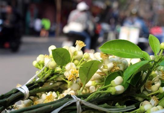 Truy tìm nguồn gốc hoa bưởi bán đầy phố Hà thành - Ảnh 4.