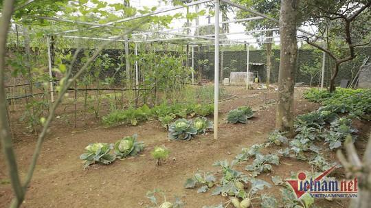 Nhà vườn rộng 1000m2 ai cũng mê của NSND Thanh Hoa - Ảnh 4.