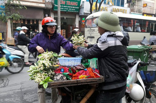 Truy tìm nguồn gốc hoa bưởi bán đầy phố Hà thành - Ảnh 5.
