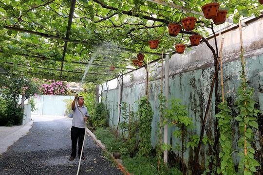 Vườn nho bê tông trĩu quả giữa Sài Gòn - Ảnh 5.