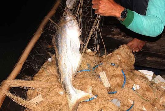 Cao điểm săn cá bông lau ở miền Tây - Ảnh 4.