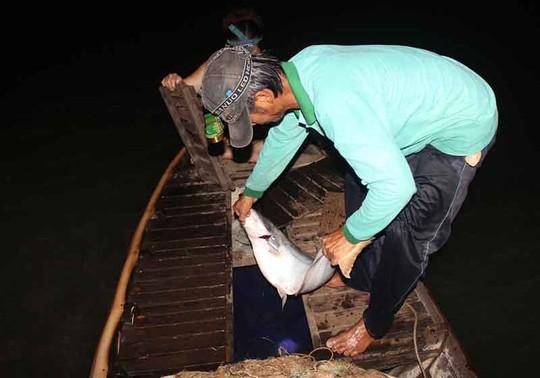 Cao điểm săn cá bông lau ở miền Tây - Ảnh 2.