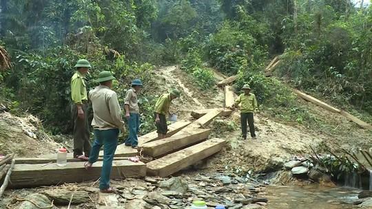 Phát hiện vụ xẻ thịt rừng phòng hộ lớn nhất tỉnh Quảng Bình - Ảnh 3.